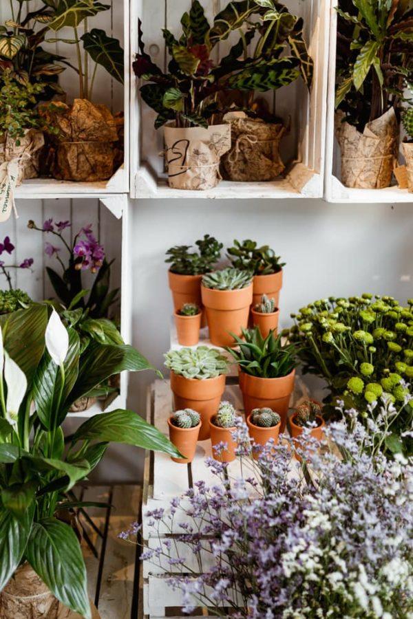 kwiaty-doniczkowe-kwiaciarnia-badylarz