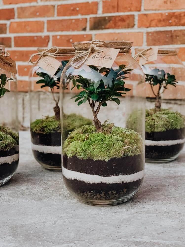 Las w słoju - lasy w szkle z Bonsai