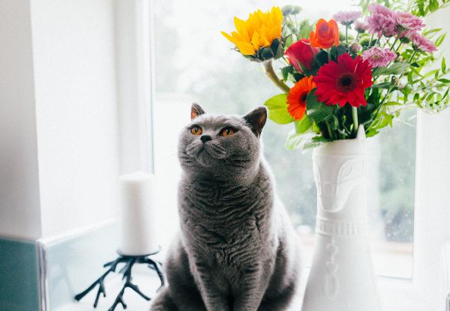 Rośliny trujące dla kota (plus lista tych całkowicie bezpiecznych)