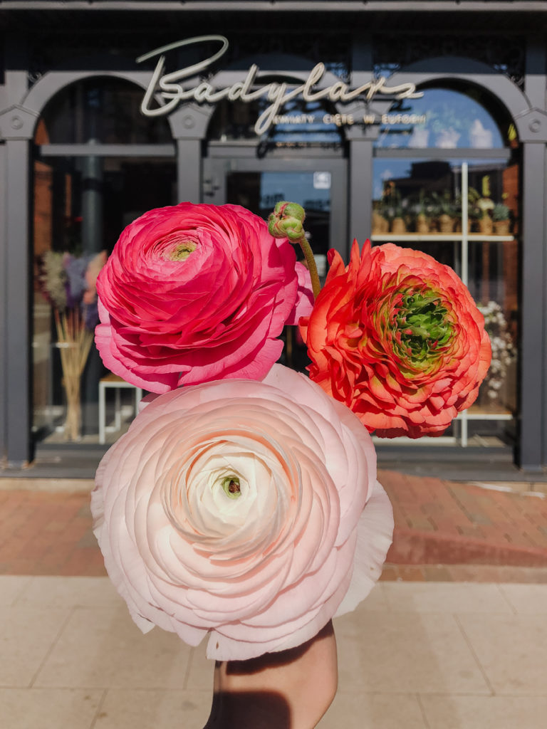 jaskry-ranunculus-kwiaciarnia-badylarz-manufaktura