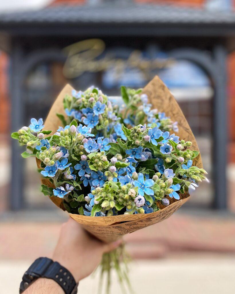 Kwiaty_cięte_oxypetalum