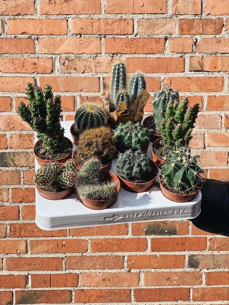 Cactus_Mix