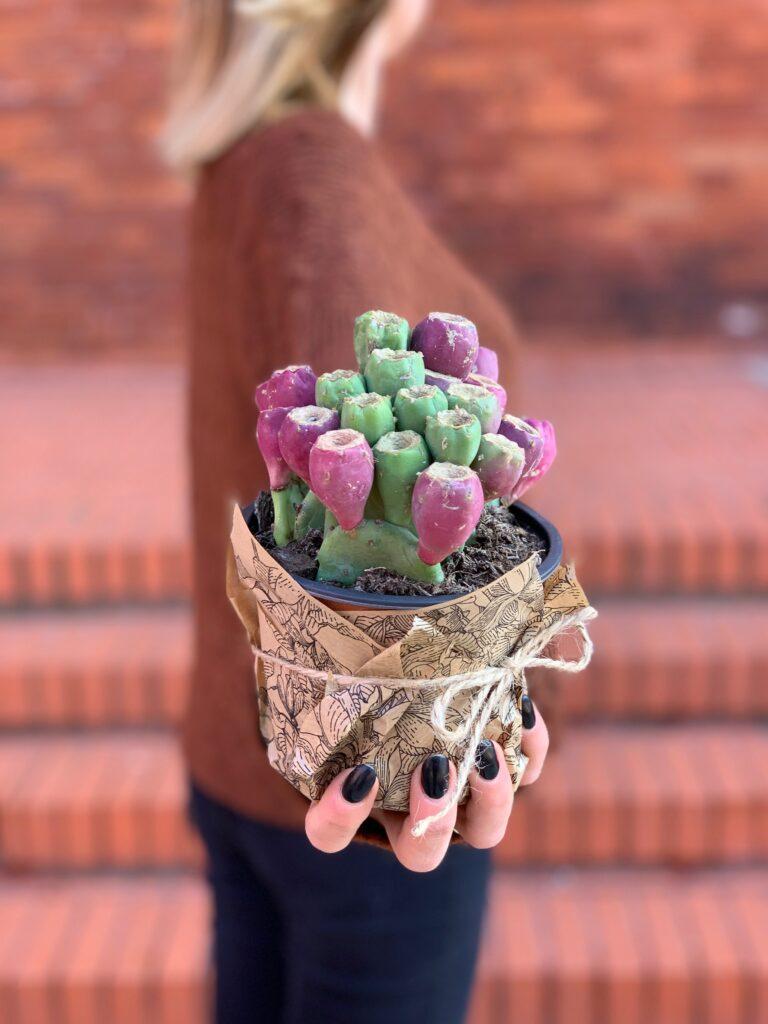 Opuntia_vulgaris