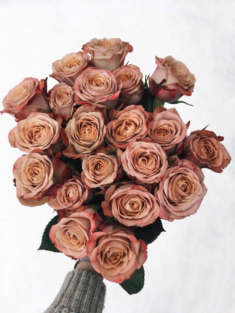 Róża_cappuccino