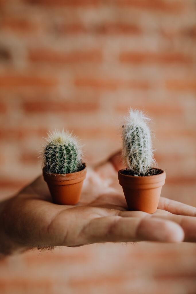 Mini_kaktusy